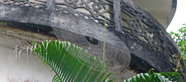 Spider web Wat Wang Wiwekaram