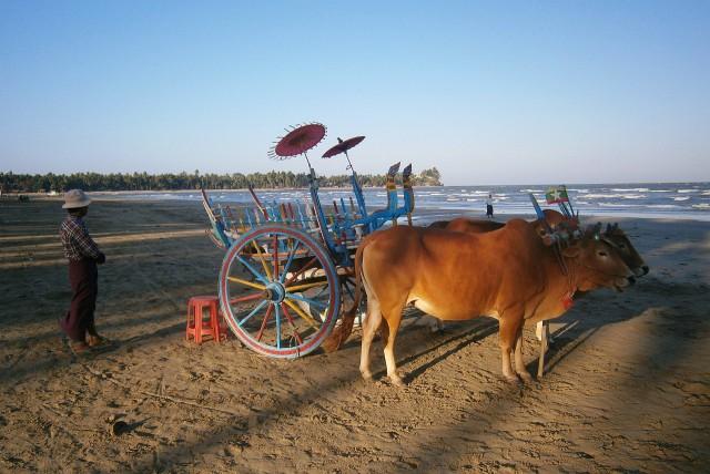 Ox Cart Chaung Tha Beach