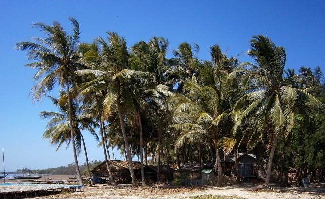 Palm cove coastline