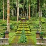 Bali Botanical