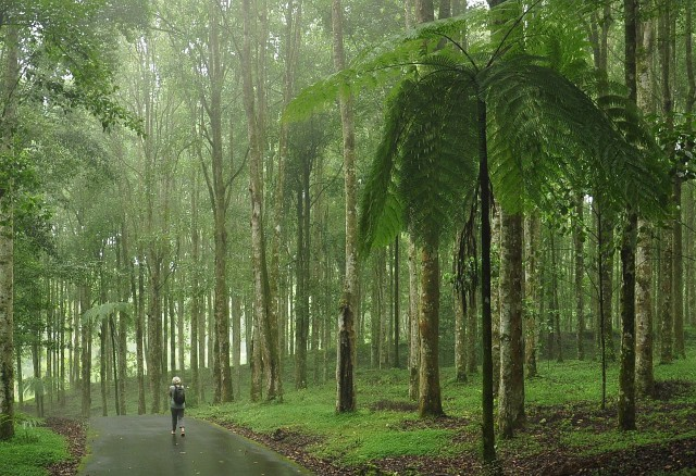 Bali Botanical Forest
