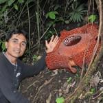 Rafflesia_and_Ayub