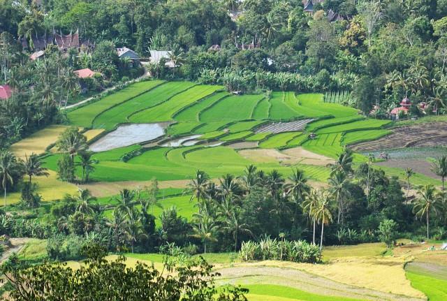 Sumatra_landscape