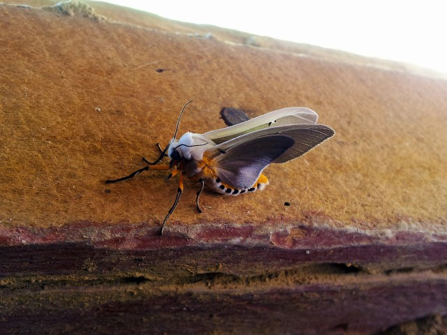Textured moth