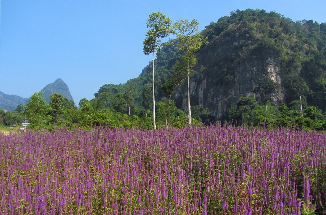 Thakhek countryside