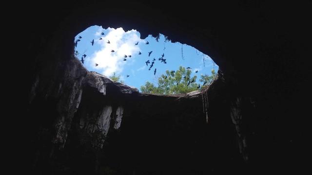 Nature_Cenote_W_S