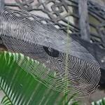 Floating spider web
